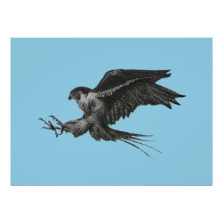 Peregrine Falcon Drawing on Canvas Poster