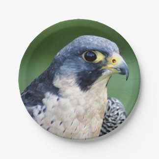Peregrine Falcon Face Photo 7 Inch Paper Plate
