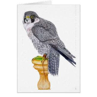 Peregrine Falcon Fathers Day Card
