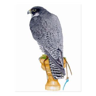 Peregrine Falcon on block postcard