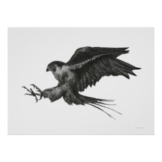 Peregrine Hawk Black White Pen and Ink Poster