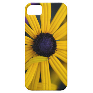 Perennial coneflower (Rudbeckia fulgida) Case For The iPhone 5