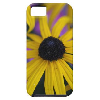 Perennial coneflower (Rudbeckia fulgida) iPhone 5 Cases
