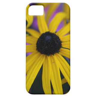 Perennial coneflower (Rudbeckia fulgida) iPhone 5 Cover