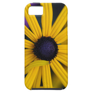 Perennial coneflower (Rudbeckia fulgida) iPhone 5 Covers
