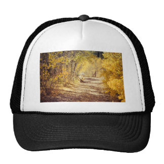 Perfect Afternoon Trucker Hat