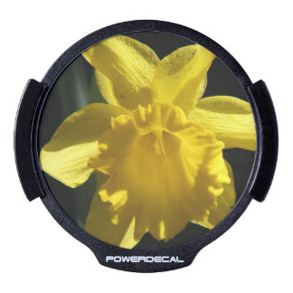 Perfect Daffodil LED Auto Decal