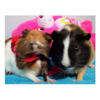 perfect guinea piggies card postcard