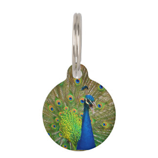 Perfect Peacock Plumage Pet ID Tag