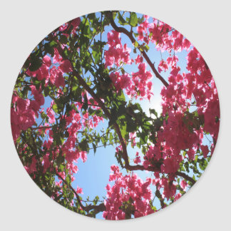 Perfect Pink Bougainvillea In Blossom Classic Round Sticker
