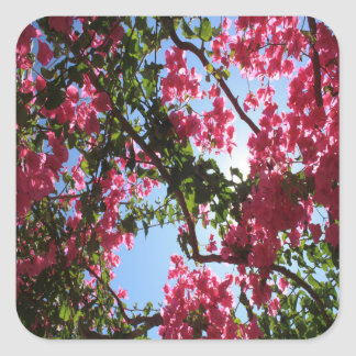 Perfect Pink Bougainvillea In Blossom Square Sticker