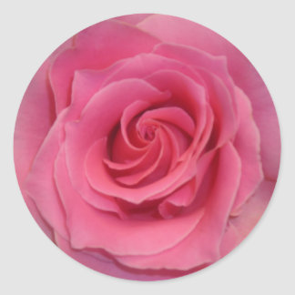 Perfect Pink Rose Classic Round Sticker