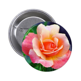 Perfect Rose in Bloom 2 Inch Round Button