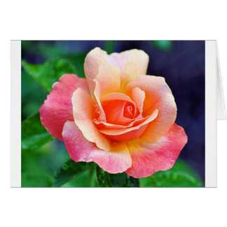 Perfect Rose in Bloom Card
