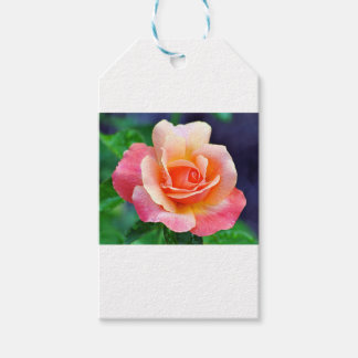 Perfect Rose in Bloom Gift Tags