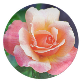 Perfect Rose in Bloom Plate