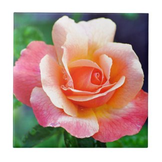 Perfect Rose in Bloom Tile