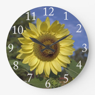 Perfect summer sunflower in blue sky. clocks
