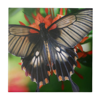 Perfect Swallowtail Butterfly Tile