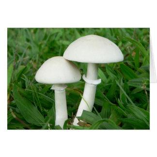 Perfect Whiecouple, Mushrooms Card