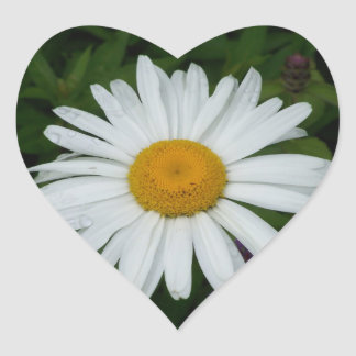 Perfect White and Yellow Daisy Photo Envelope Seal Heart Sticker
