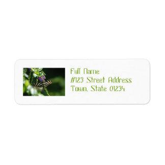 Perfect Zebra Butterfly Custom Return Address Labels