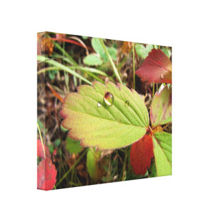 Perfection in Droplet Form Canvas Print