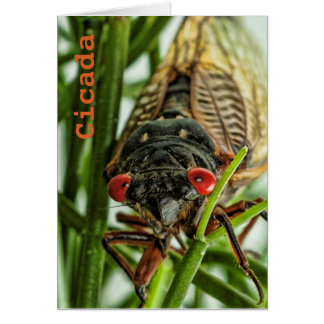 Periodical Cicada Large Insect Macro Photo Card