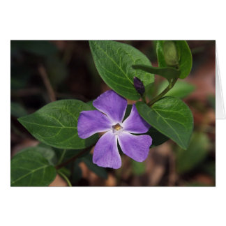 Periwinkle Flower Card
