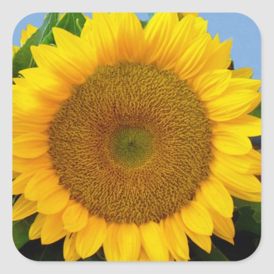 Perky Sunflower Square Sticker