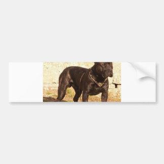 perro de pressa canerio full bumper sticker