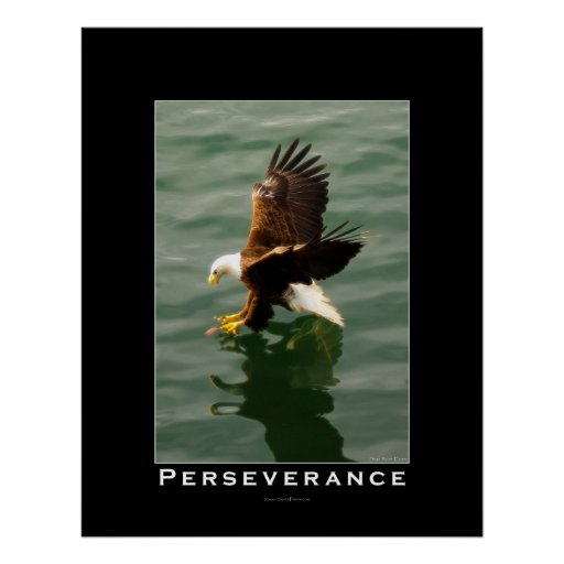 Persistence Motivational Quotes: PERSEVERANCE Bald Eagle Motivational Art Poster