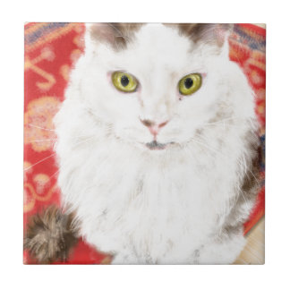 Persian cat on a red Persian carpet Tile