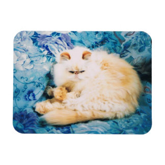 Persian Cat Photo Magnet
