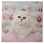 Persian cat sitting on pink pillow