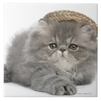 Persian Kitten (2 months old) wearing a straw Tile