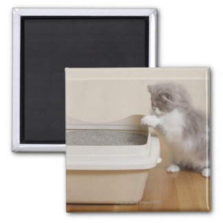 Persian Kitten looking at litter box Magnet