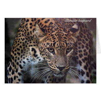Persian leopard Thank You Card
