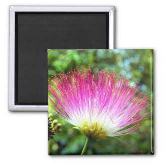 Persian Silk Tree Flower Magnet