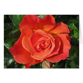 Persimmon Rose Card