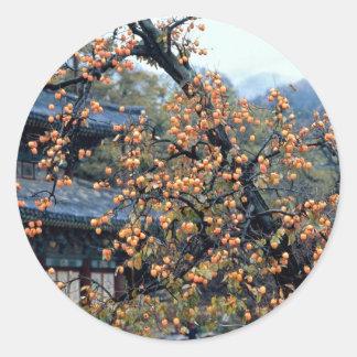 Persimmons tree, fall classic round sticker