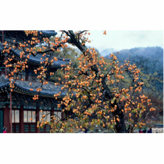 Persimmons tree, fall standing photo sculpture