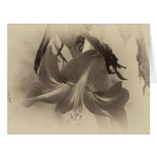 Personalized Antique Amaryllis Flower Photo Card