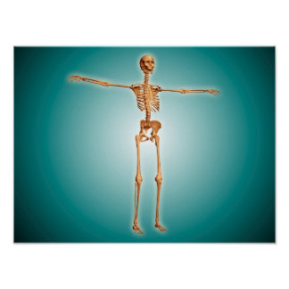 Perspective View Of Human Skeletal System Poster
