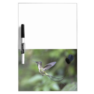 Peru Hummingbird Dry Erase Board Message Bd