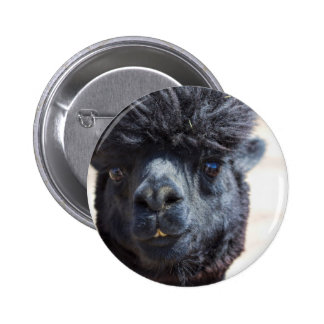Peruvian Alpaca With Crazy Hair Button