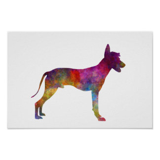 Peruvian Hairless Dog in watercolor Poster