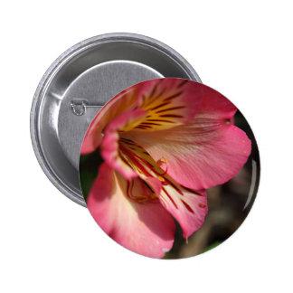 Peruvian lily (Alstroemeria aurea) 2 Inch Round Button