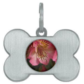 Peruvian lily (Alstroemeria aurea) Pet Name Tag