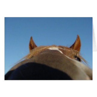 Peruvian Paso Gaited Horse Filly - Nose Card